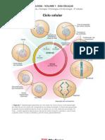 Biologia - Volume 01 - Das Células 09 Ciclo celular
