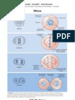 Biologia - Volume 01 - Das Células 10 Mitose