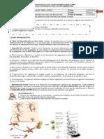Guia 3. Octavo. Reproduccion de Procariotas y eucariotas