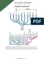 Biologia - Volume 03 - As Populações 12 Filogenia de primatas
