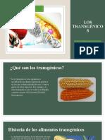 los transgénicos.pptx