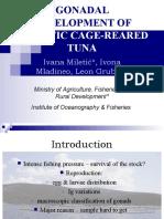 Gonadal Development of Adriatic Cage-reared Tuna - Ivana Miletic, Ivona Mladineo, Leon Grubisic