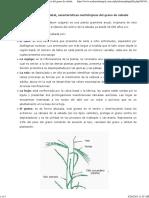 2. Identificación varietal, características morfológicas del grano de cebada