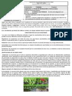 ECOSISTEMAS (1).docx