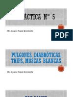 PLAGAS COMUNES PARA MUCHOS CULTIVOS PRÁCTICA pdf.pdf