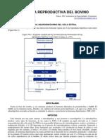 71-fisiologia_reproductiva_del_bovino
