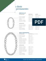5_éruption-des-dents-primaires