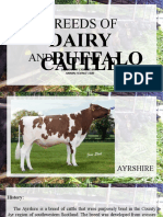 ANSCI 1100 - DAIRY CATTLE