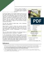 Yellow_boxfish.pdf