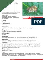 Javanischer Ochsenfrosch