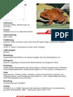 Salomonen-Zipfelfrosch
