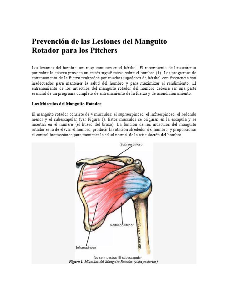 Único Hombro Diagrama Músculos Anatomía Ideas - Anatomía de Las ...