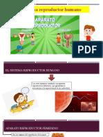 sistema reproductor - 5to primaria