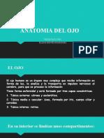 ANATOMIA DEL OJO   EXPOSICION.pptx