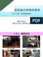 口蹄疫罹患家畜の特徴的病変(2010年 宮崎県事例)