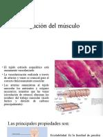 Irrigación del músculo
