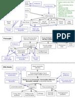 Respiratory Pathophysiologies