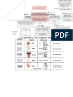 mapa sistema nervioso lore.docx
