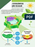 respiração celular ciencias.pdf
