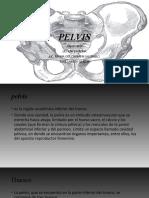 anatomia PELVIS
