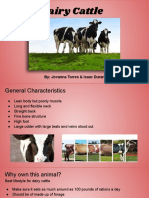 dairy cattle project