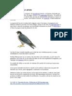 Concepto de aves