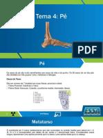 Aula 4 Anatomia do PE