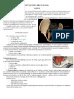 III. 37. Muschiul ridicator anal.docx