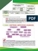GUIA # 4 SISTEMA NERVIOSO HUMANO.pdf