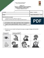 Guía de Trabajo +ORGANOS DE LOS SENTIDOS VISTA Y OLFATO