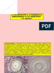 fecdesmamiferos(5)