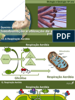 BioLOGIARespiracaoAerobia