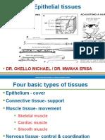 Skin & epithelial tissues