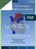 UACV - Torax 1