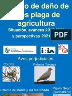Aves Plagas Avances MGAP 2020