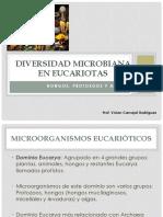 Tema 3 Eucarya Hongos.pptx