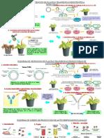 Esquemas Obtencion de Plantas Transgenicas.pptx