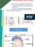 CLASE 2 UAM PPT MEDULA ESPINAL ASPECTOS GENERALES PROFESOR..pptx