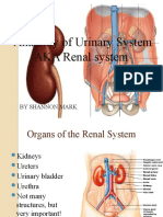 Anatomy of Urinary System