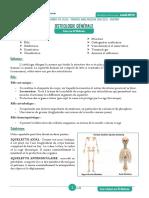 anatomie_osteo
