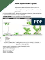 El BIOFILM afecta la productividad de tu granja.doc