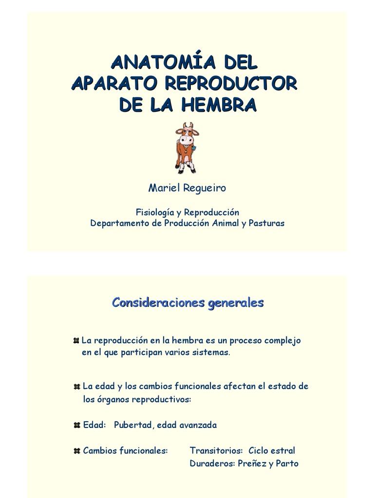Bonito Anatomía Ovejas Hembra Imagen - Imágenes de Anatomía Humana ...