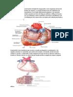 cardiaco-parte-2
