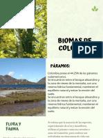 Verde Foto Árbol Tronco Desarrollo Curso Ecología Ancho Presentación.pdf