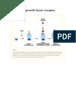 Epidermal Growth Factor Receptor