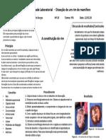 Relatório - Dissecação de um rim