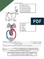 sistema circulatrio.pdf