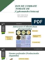 METODOS DE COMBATE TOMATE DE ÁRBOL(Cyphomandra betacea)