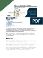 LAS ACUAPORINAS Y SUSS PATOLOGÍAS.docx