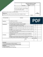 Pauta de evaluacion triptico de las plantas 3 basico
